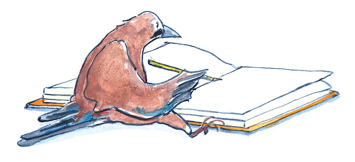 Buch-Vogel-zeichnen-Angela-Holzmann